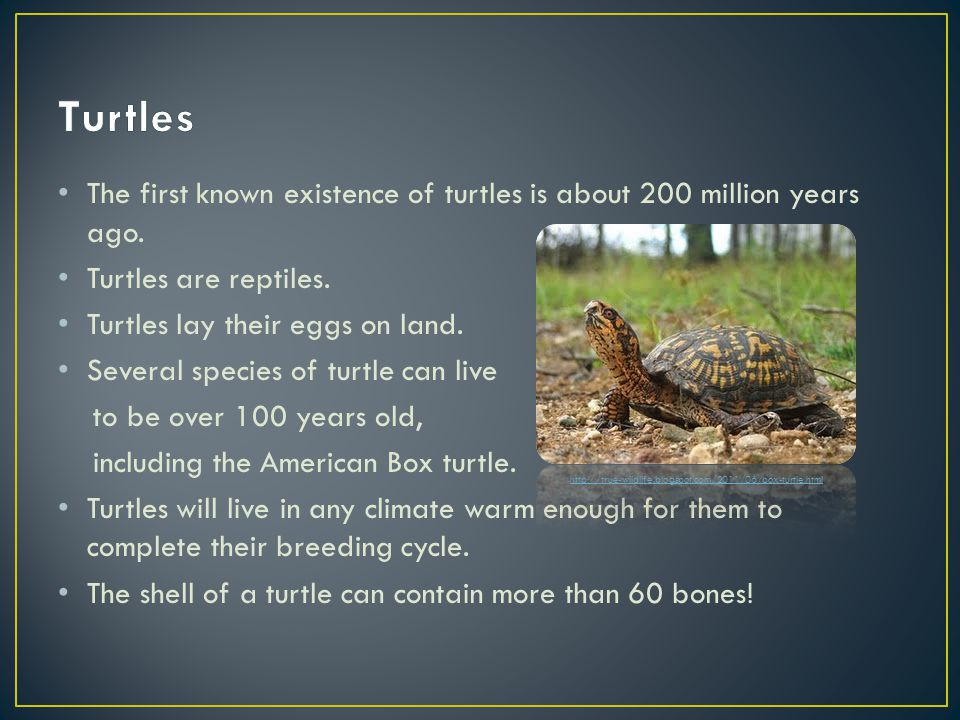 The first known existence of turtles is about 200 million years ago.