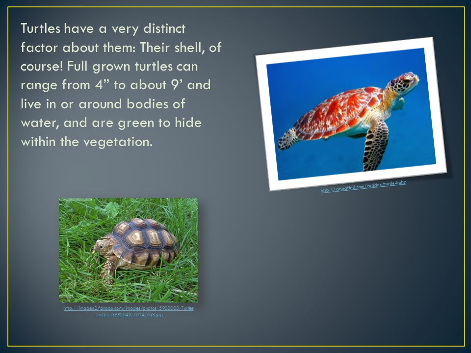 Turtles have a very distinct factor about them: Their shell, of course.