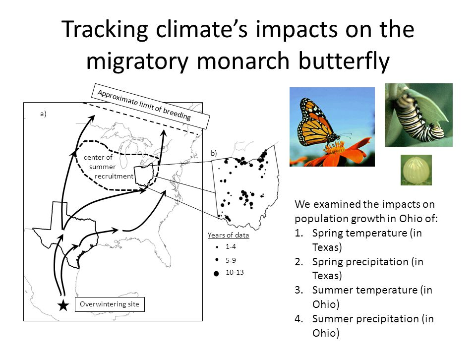 Tracking climates impacts on the migratory monarch butterfly Overwintering site Approximate limit of breeding center of summer recruitment a) b) Years