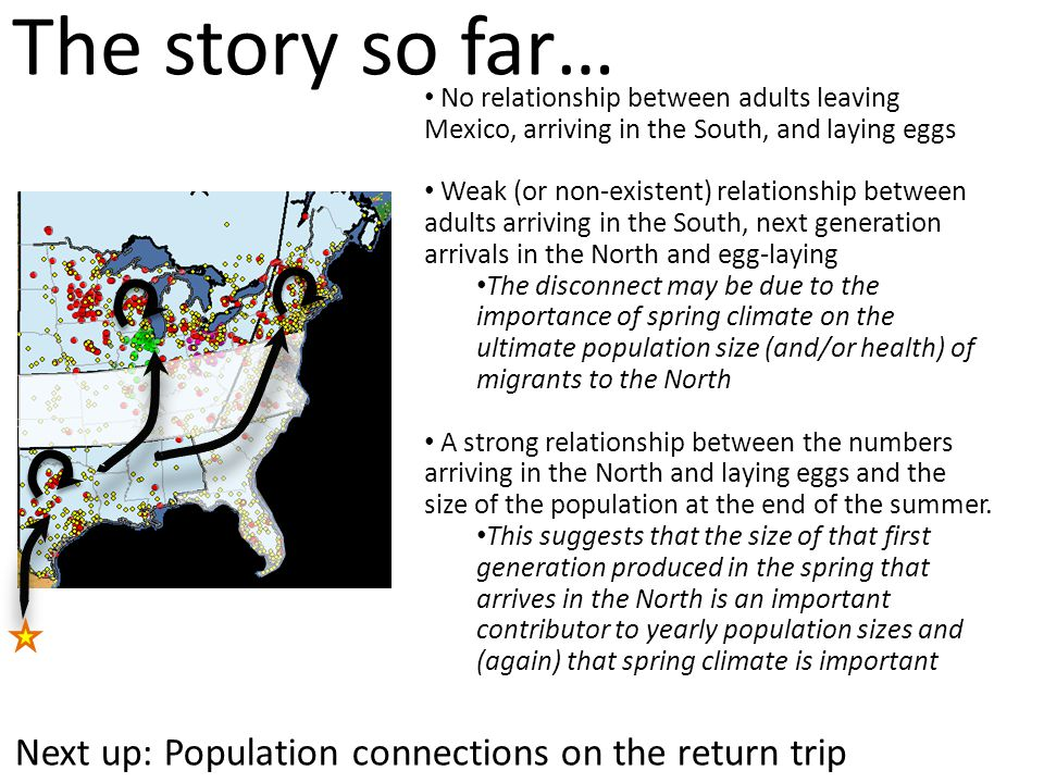 The story so far… No relationship between adults leaving Mexico, arriving in the South, and laying eggs Weak (or non-existent) relationship between ad