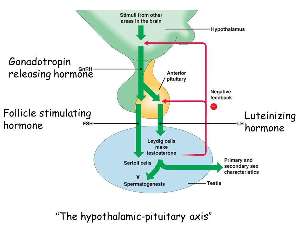 Gonadotropin releasing hormone Follicle stimulating hormone Luteinizing hormone The hypothalamic-pituitary axis
