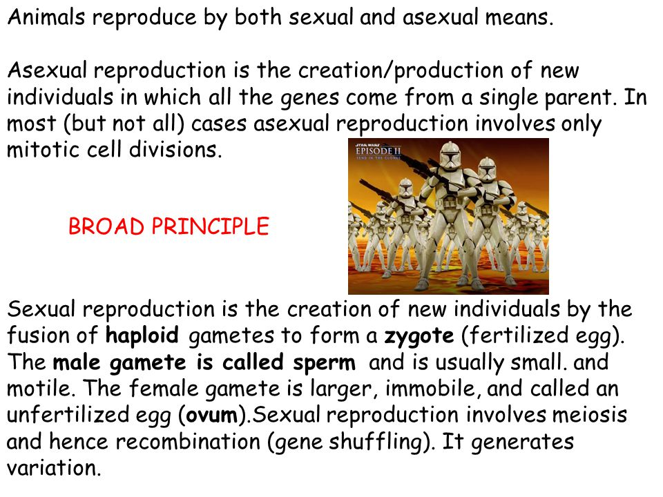 Animals reproduce by both sexual and asexual means. Asexual reproduction is the creation/production of new individuals in which all the genes come fro