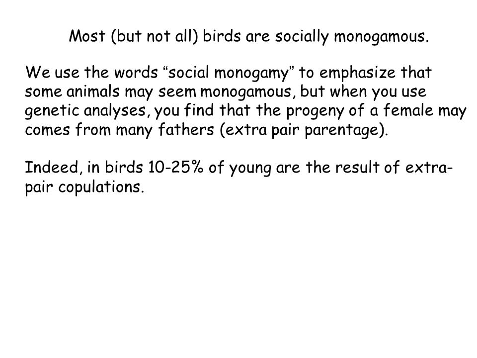 Most (but not all) birds are socially monogamous. We use the words social monogamy to emphasize that some animals may seem monogamous, but when you us