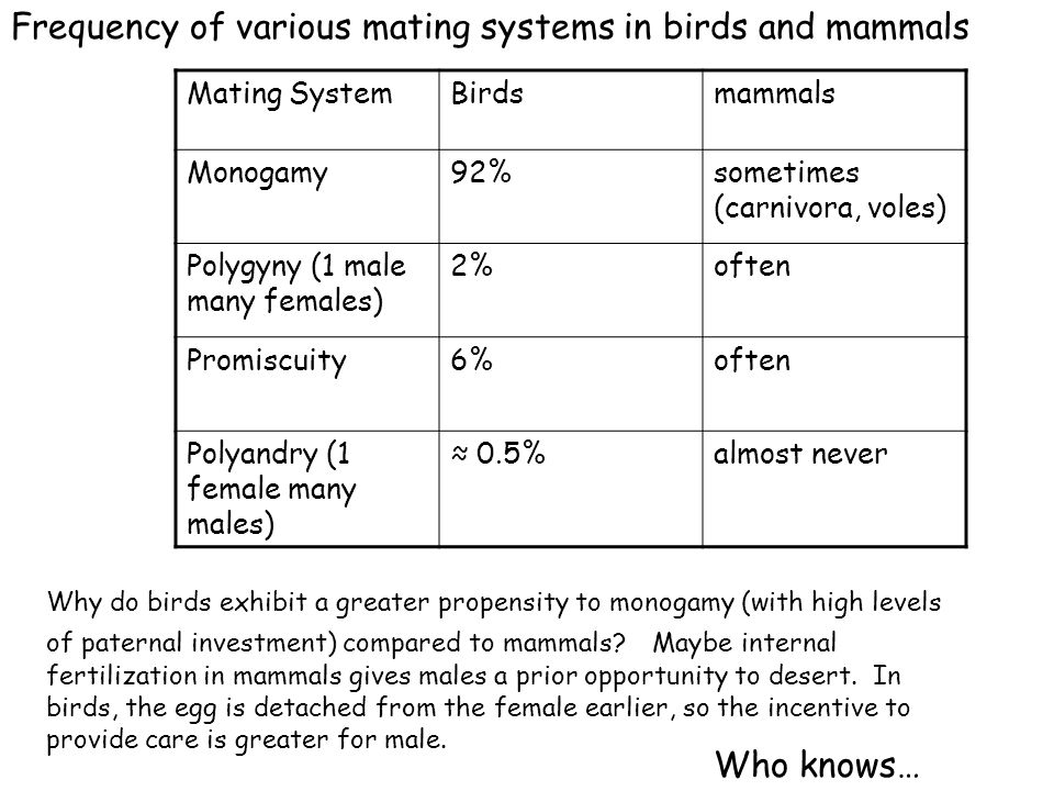 Frequency of various mating systems in birds and mammals Mating SystemBirdsmammals Monogamy92%sometimes (carnivora, voles) Polygyny (1 male many femal