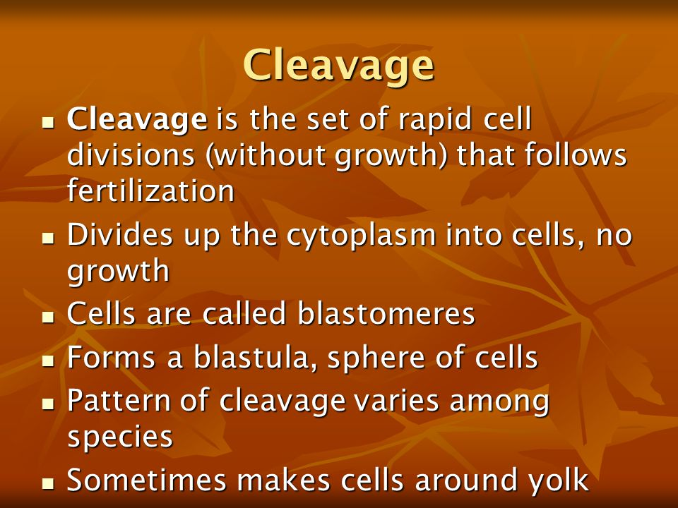 Cleavage Cleavage is the set of rapid cell divisions (without growth) that follows fertilization Cleavage is the set of rapid cell divisions (without growth) that follows fertilization Divides up the cytoplasm into cells, no growth Divides up the cytoplasm into cells, no growth Cells are called blastomeres Cells are called blastomeres Forms a blastula, sphere of cells Forms a blastula, sphere of cells Pattern of cleavage varies among species Pattern of cleavage varies among species Sometimes makes cells around yolk Sometimes makes cells around yolk