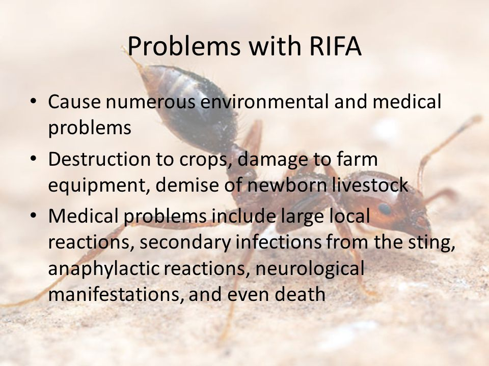 Problems with RIFA Cause numerous environmental and medical problems Destruction to crops, damage to farm equipment, demise of newborn livestock Medical problems include large local reactions, secondary infections from the sting, anaphylactic reactions, neurological manifestations, and even death