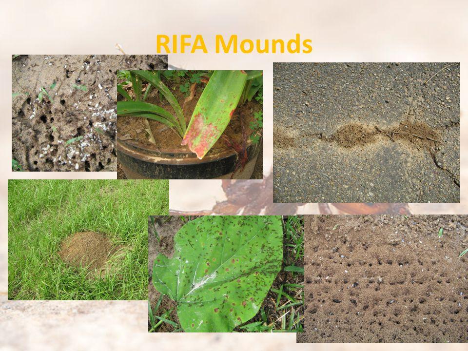 RIFA Mounds