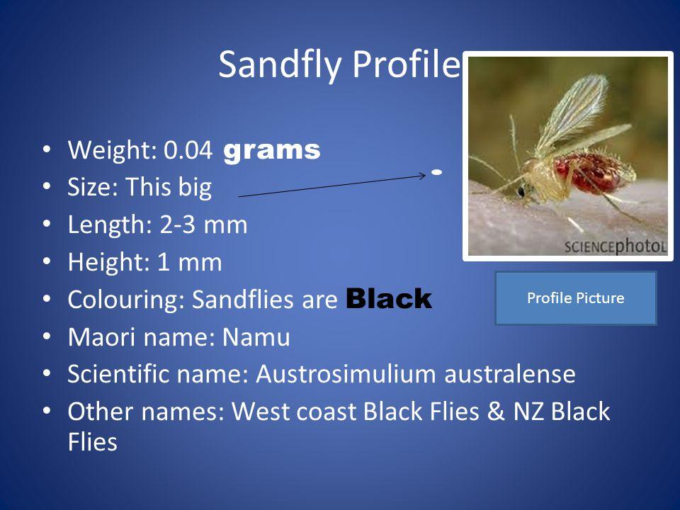 Sandfly Profile Weight: 0.04 grams Size: This big Length: 2-3 mm Height: 1 mm Colouring: Sandflies are Black Maori name: Namu Scientific name: Austrosimulium australense Other names: West coast Black Flies & NZ Black Flies Profile Picture