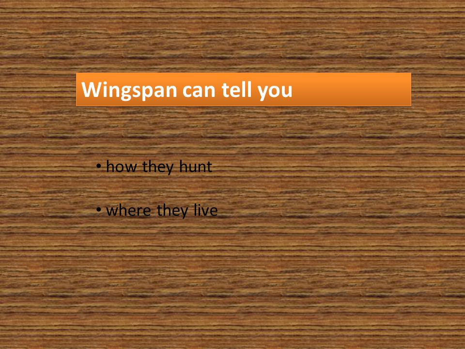 Wingspan can tell you how they hunt where they live