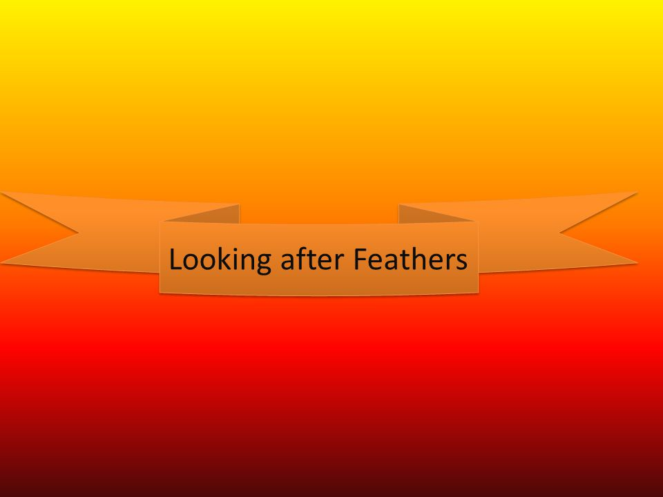 Looking after Feathers