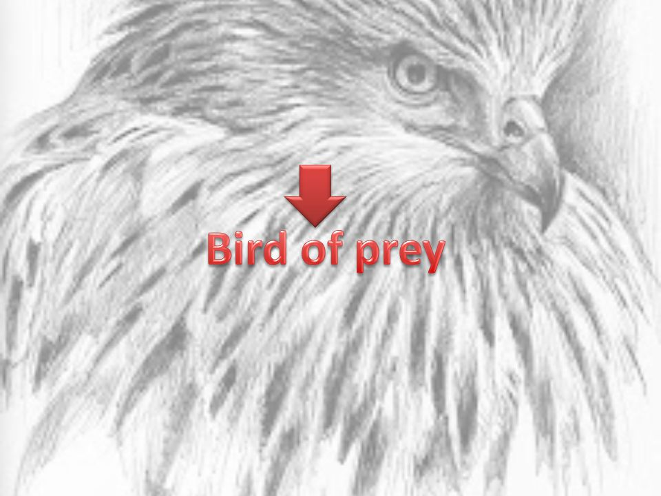 What is a bird of prey .A bird of prey is a bird who eats; Other birds, Animals, fish or insects.