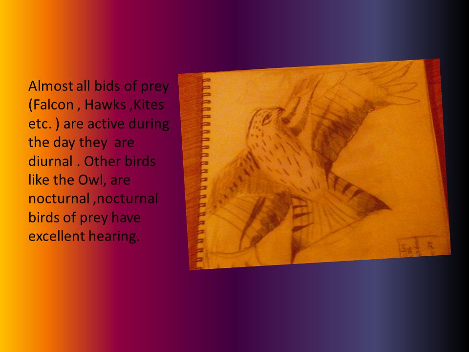 Almost all bids of prey (Falcon, Hawks,Kites etc. ) are active during the day they are diurnal.