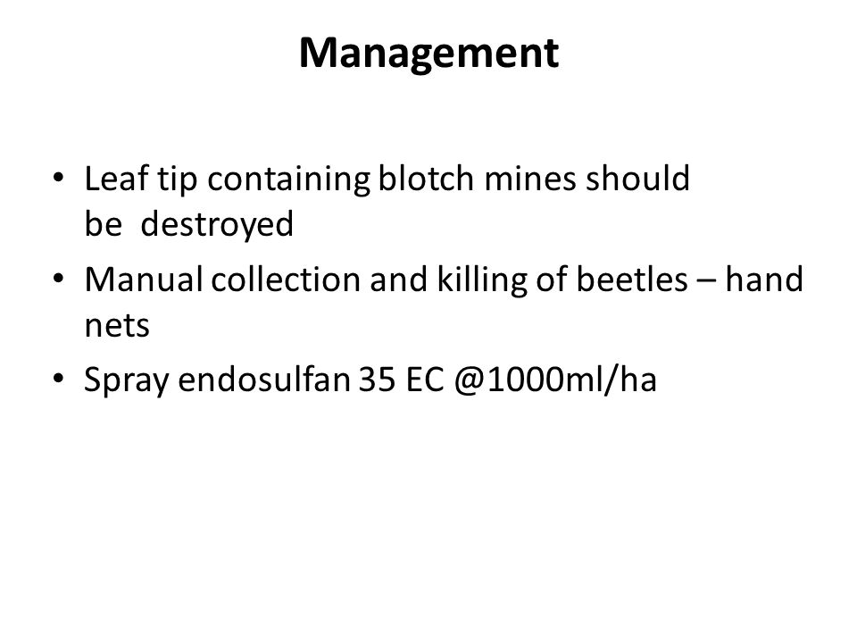 Management Leaf tip containing blotch mines should be destroyed Manual collection and killing of beetles – hand nets Spray endosulfan 35 EC @1000ml/ha
