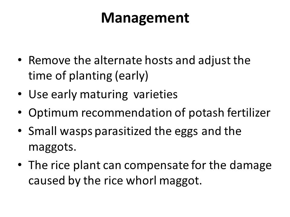 Management Remove the alternate hosts and adjust the time of planting (early) Use early maturing varieties Optimum recommendation of potash fertilizer