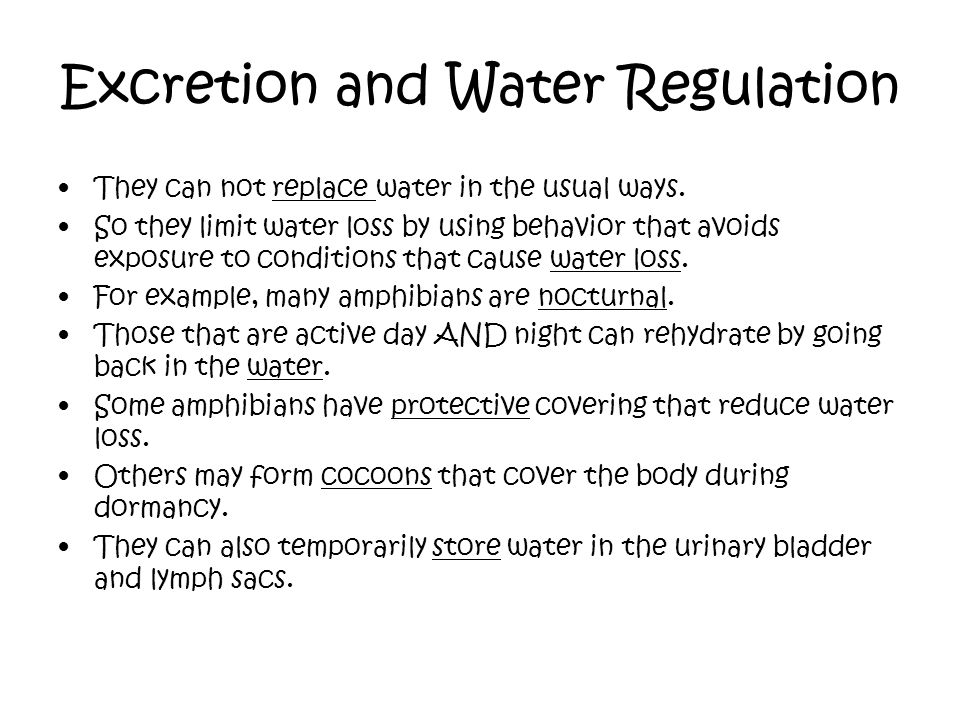 Excretion and Water Regulation They can not replace water in the usual ways. So they limit water loss by using behavior that avoids exposure to condit
