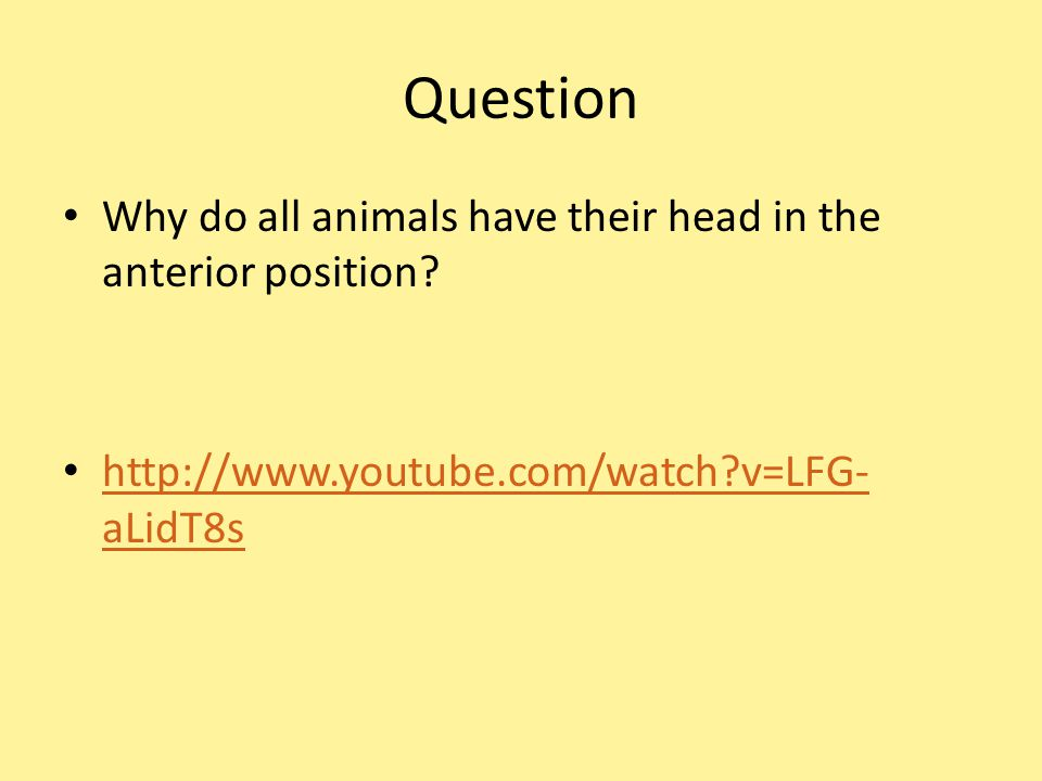 Question Why do all animals have their head in the anterior position.