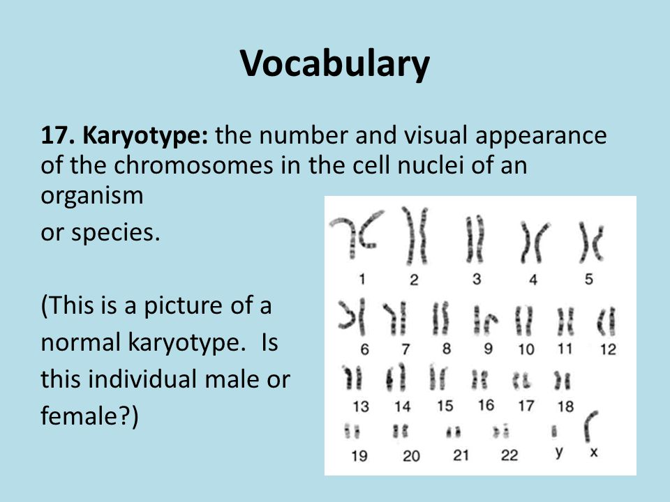 Vocabulary 17. Karyotype: the number and visual appearance of the chromosomes in the cell nuclei of an organism or species. (This is a picture of a no