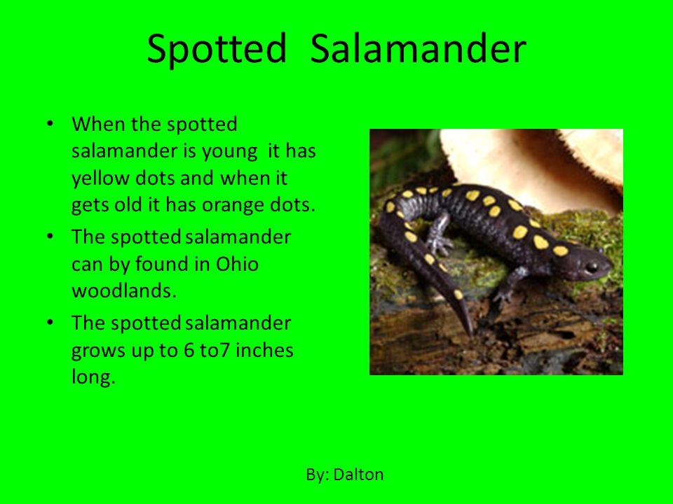 Wood frogs live on land.It eats small invertebrates.