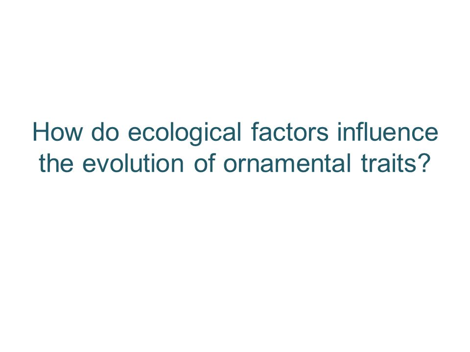 How do ecological factors influence the evolution of ornamental traits?