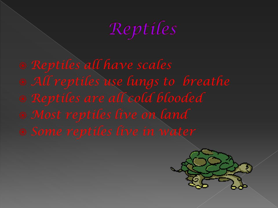 Reptiles all have scales All reptiles use lungs to breathe Reptiles are all cold blooded Most reptiles live on land Some reptiles live in water