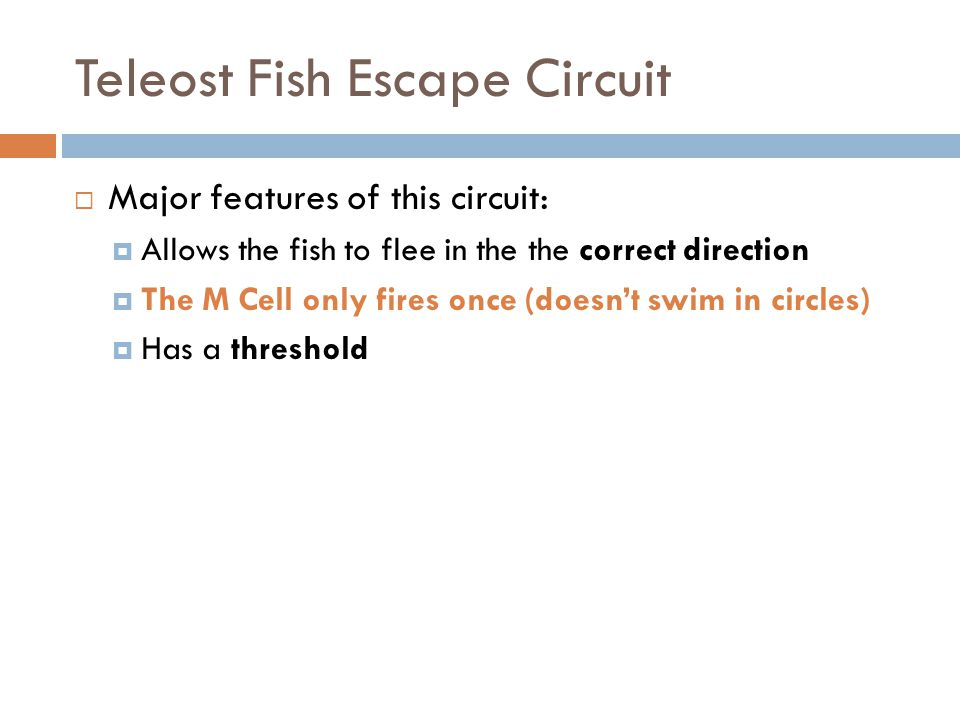 Teleost Fish Escape Circuit Major features of this circuit: Allows the fish to flee in the the correct direction The M Cell only fires once (doesnt swim in circles) Has a threshold