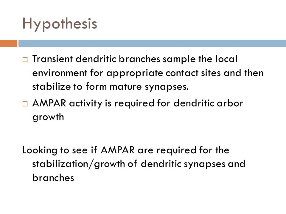 Hypothesis Transient dendritic branches sample the local environment for appropriate contact sites and then stabilize to form mature synapses.