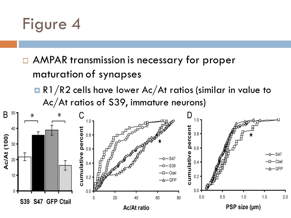 Figure 4 AMPAR transmission is necessary for proper maturation of synapses R1/R2 cells have lower Ac/At ratios (similar in value to Ac/At ratios of S39, immature neurons)