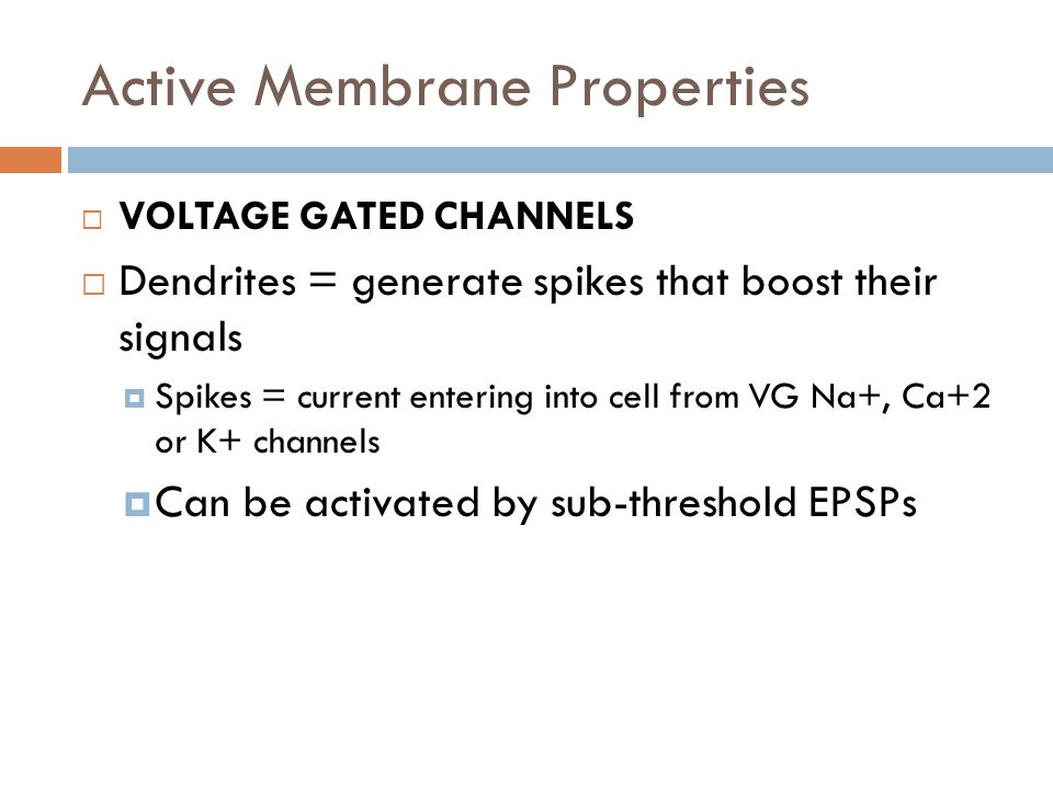 Active Membrane Properties VOLTAGE GATED CHANNELS Dendrites = generate spikes that boost their signals Spikes = current entering into cell from VG Na+, Ca+2 or K+ channels Can be activated by sub-threshold EPSPs