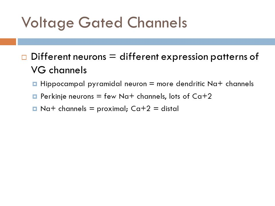 Voltage Gated Channels Different neurons = different expression patterns of VG channels Hippocampal pyramidal neuron = more dendritic Na+ channels Perkinje neurons = few Na+ channels, lots of Ca+2 Na+ channels = proximal; Ca+2 = distal