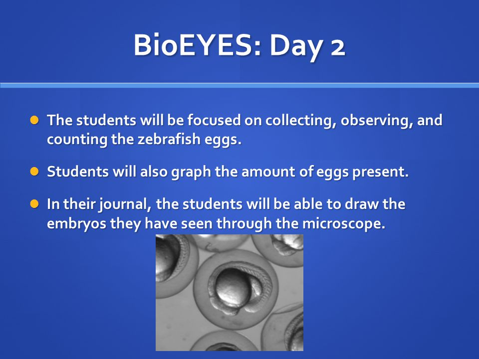 BioEYES: Day 2 The students will be focused on collecting, observing, and counting the zebrafish eggs.