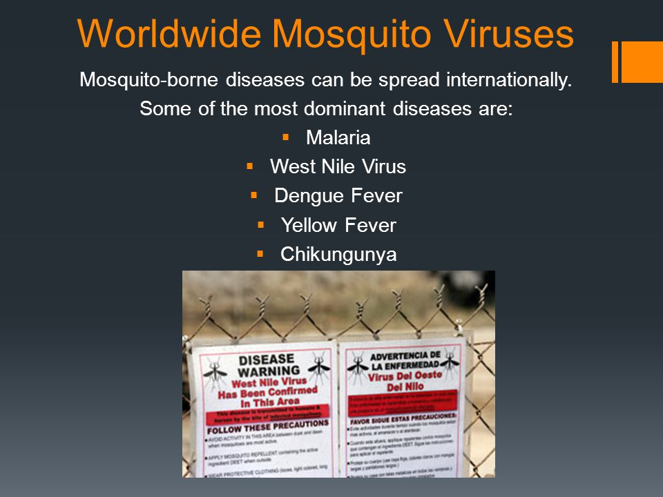 Worldwide Mosquito Viruses Mosquito-borne diseases can be spread internationally.
