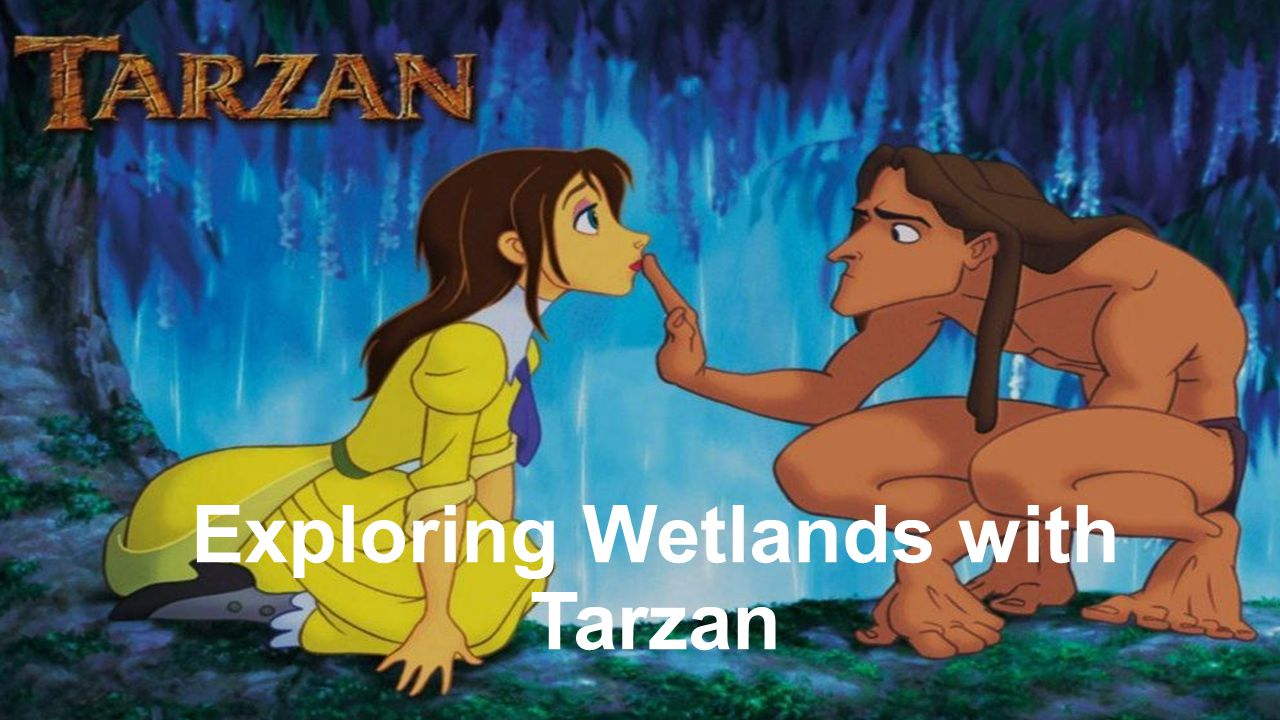 Exploring Wetlands with Tarzan