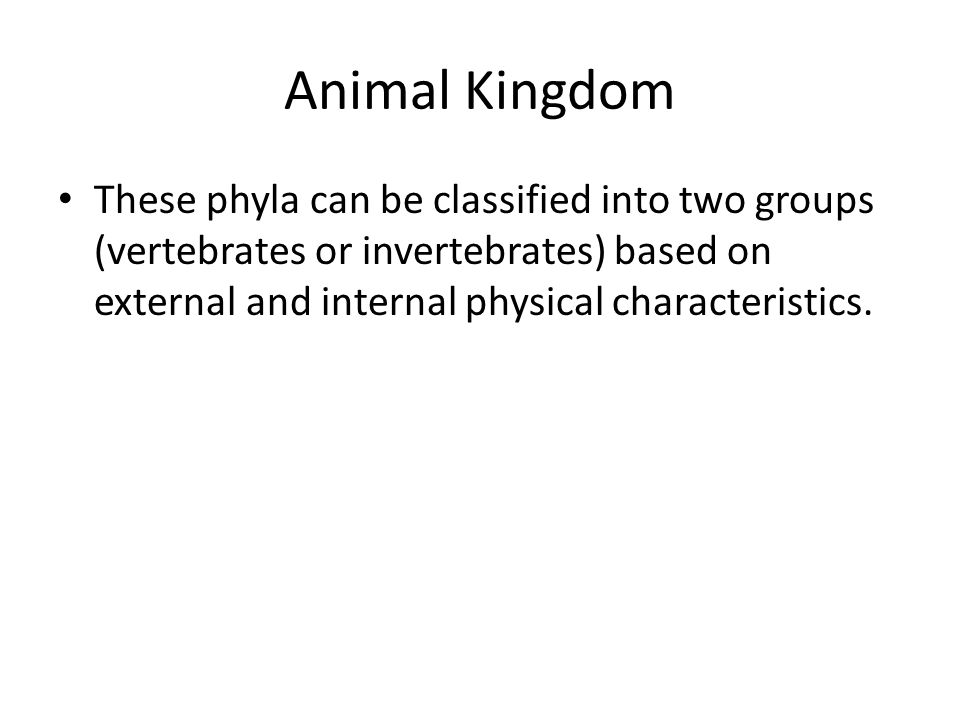 Animal Kingdom These phyla can be classified into two groups (vertebrates or invertebrates) based on external and internal physical characteristics.