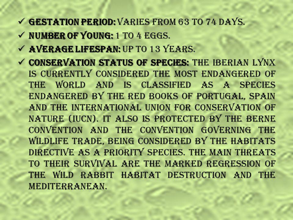 Geographical Distribution: Geographical Distribution: Portugal and Spain. Natural habitat: Natural habitat: Its preferred habitats Mediterranean woodl