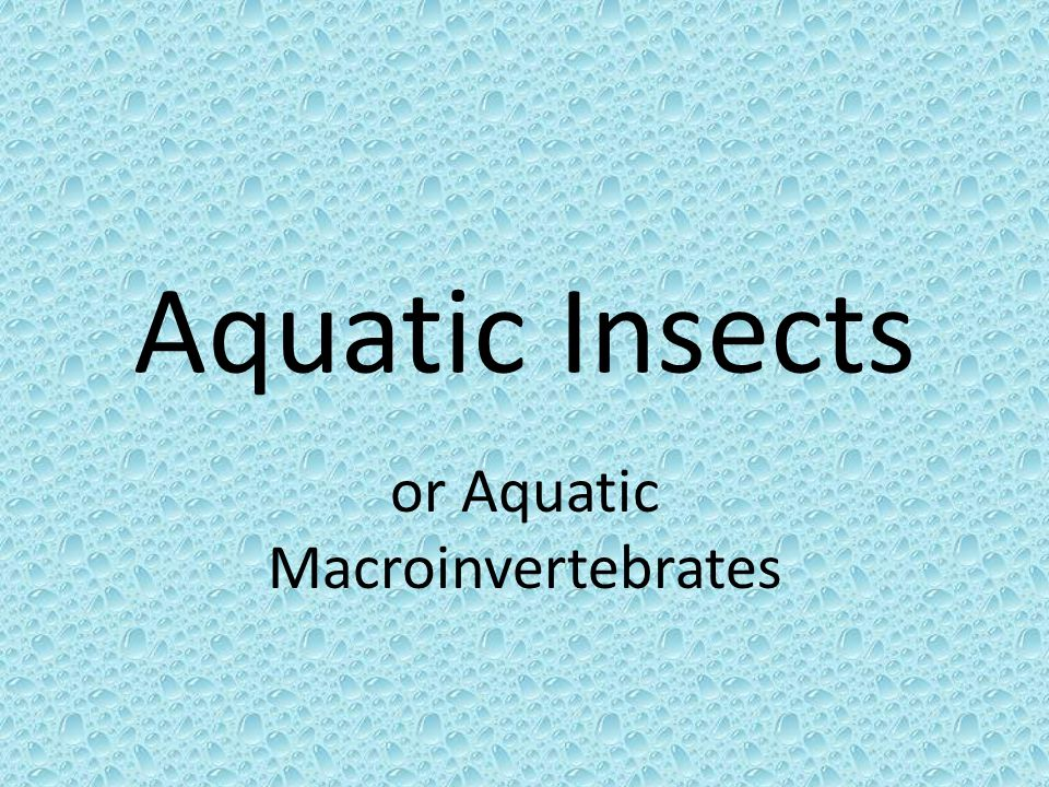 Life Cycle Explained http://www.lakecountyfl.gov/pdfs/Public_Wor ks/mosquito_and_aquatic_plants/aquatic_mi dges.pdf http://www.lakecountyfl.gov/pdfs/Public_Wor ks/mosquito_and_aquatic_plants/aquatic_mi dges.pdf