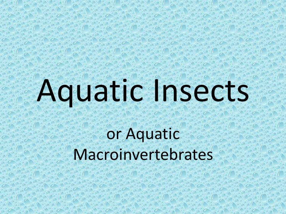 Classification Kingdom Animalia (Animals) Phylum Arthropoda (Arthropods) Class Insecta (Insects)