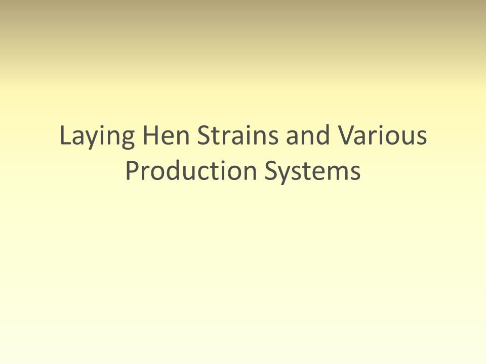 Laying Hen Strains and Various Production Systems