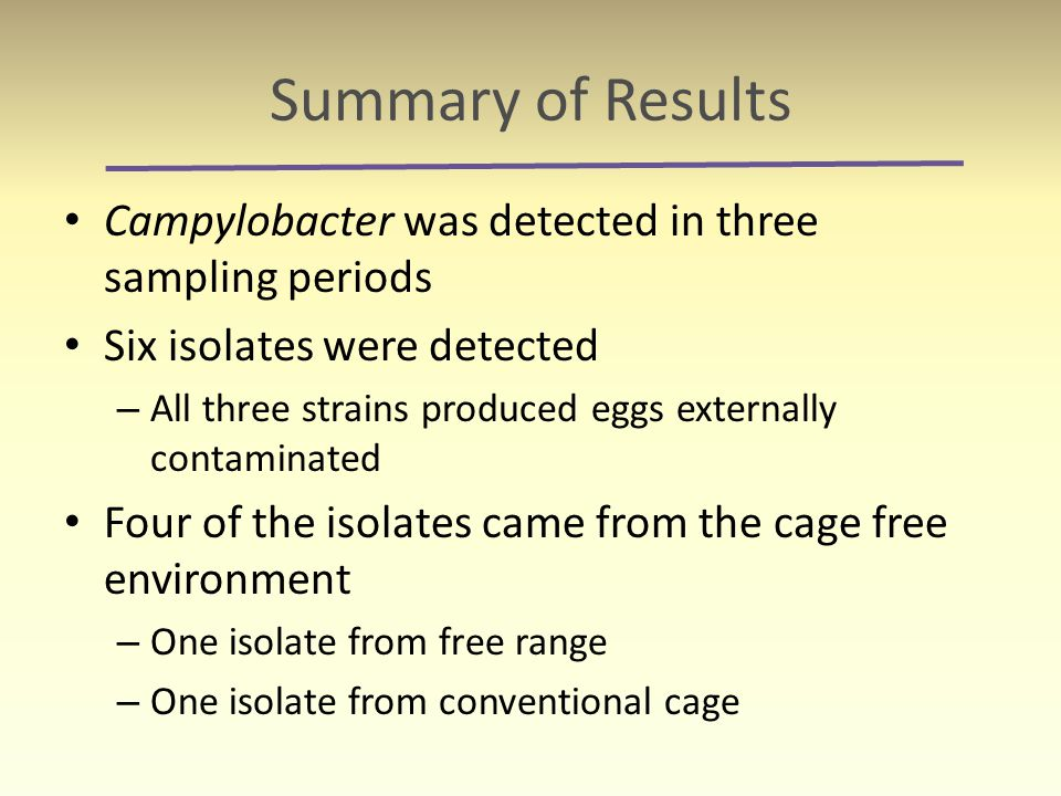 Summary of Results Campylobacter was detected in three sampling periods Six isolates were detected – All three strains produced eggs externally contam