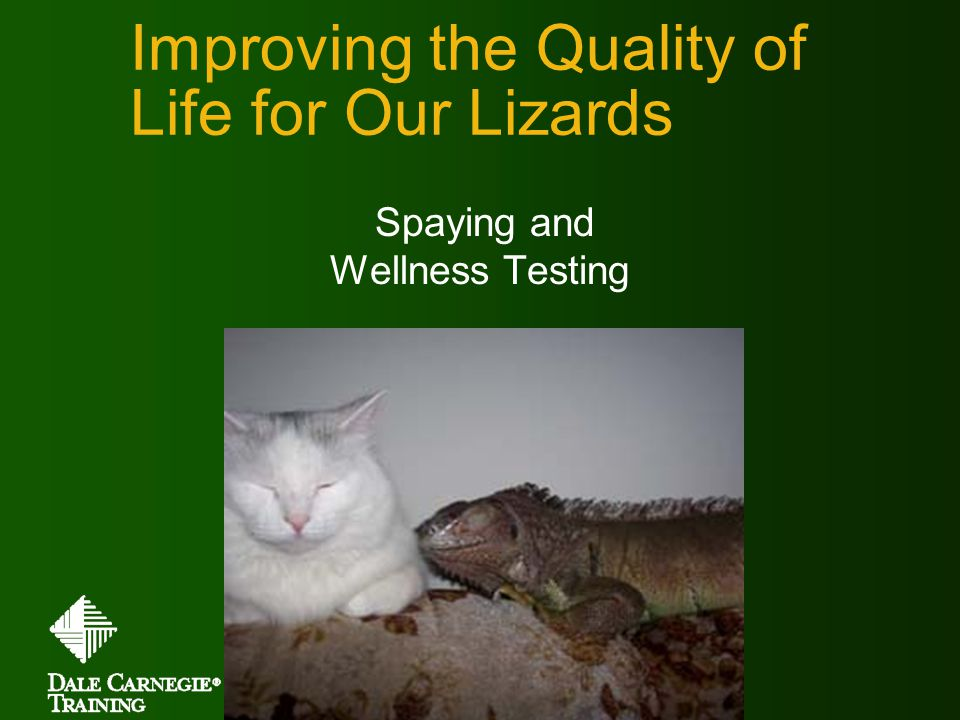 Improving the Quality of Life for Our Lizards Spaying and Wellness Testing Copyright © Dale Carnegie & Associates, Inc.