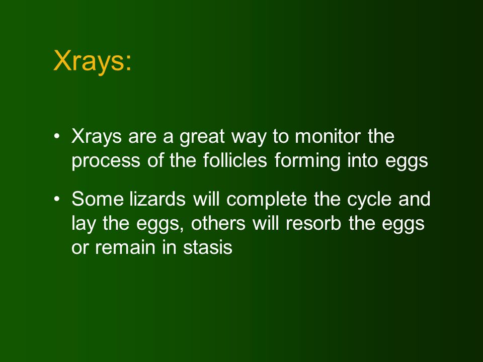 Xrays: Xrays are a great way to monitor the process of the follicles forming into eggs Some lizards will complete the cycle and lay the eggs, others will resorb the eggs or remain in stasis