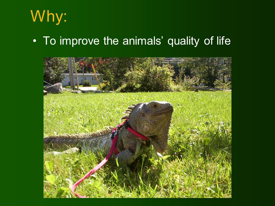 Why: To improve the animals quality of life