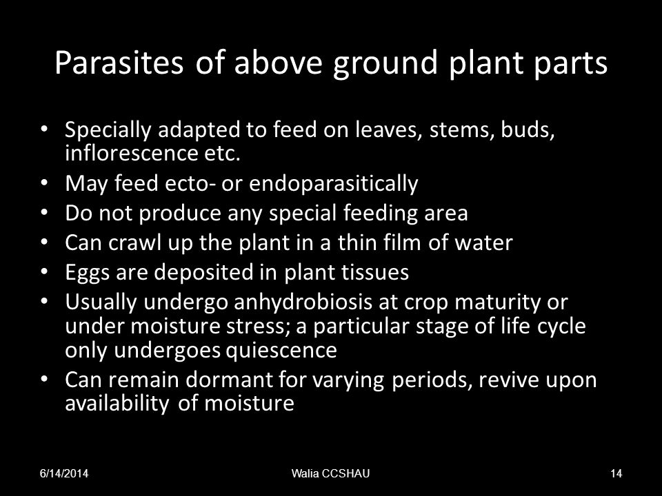 Parasites of above ground plant parts Specially adapted to feed on leaves, stems, buds, inflorescence etc. May feed ecto- or endoparasitically Do not
