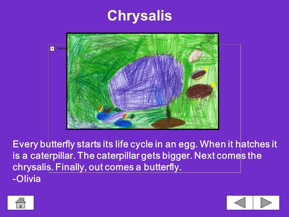 A chrysalis shakes because it is staying away from danger.