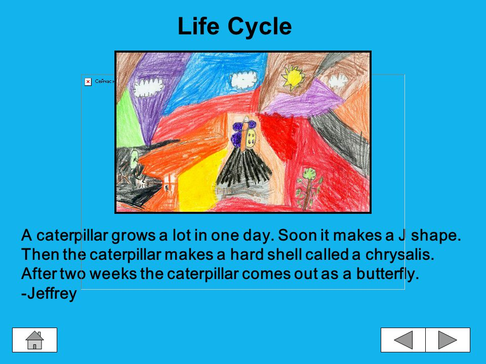 A butterfly life cycle begins with an egg. Next comes a caterpillar.