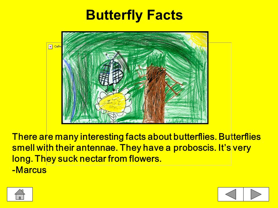Interesting Facts Butterfly FactsButterfly WingsButterflies Taste Butterflies EatProboscisCaterpillars