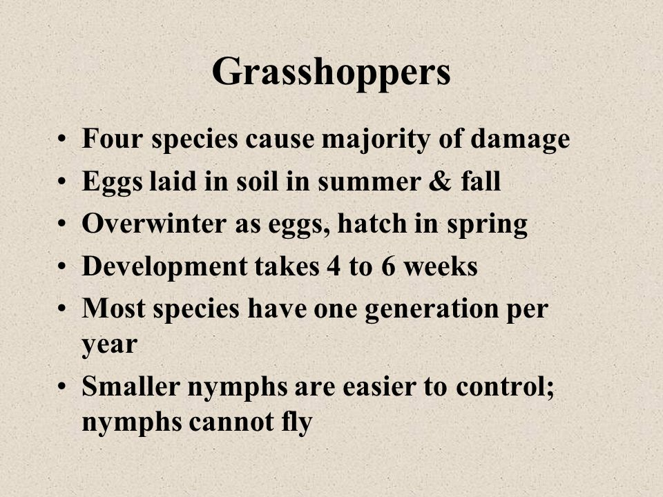 Four species cause majority of damage Eggs laid in soil in summer & fall Overwinter as eggs, hatch in spring Development takes 4 to 6 weeks Most speci