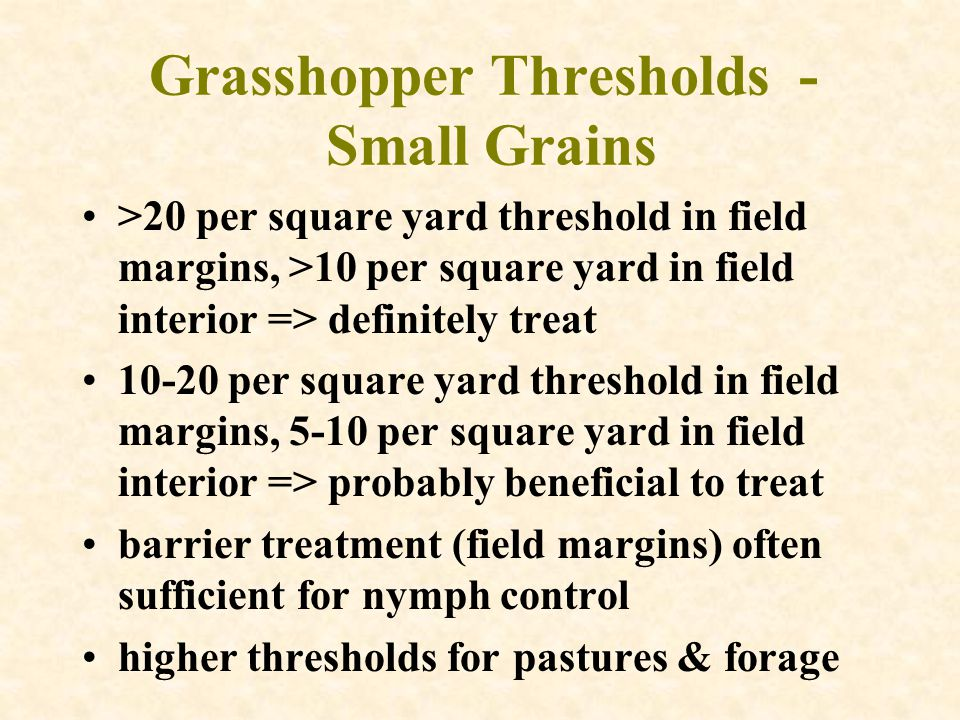 Grasshopper Thresholds - Small Grains >20 per square yard threshold in field margins, >10 per square yard in field interior => definitely treat 10-20