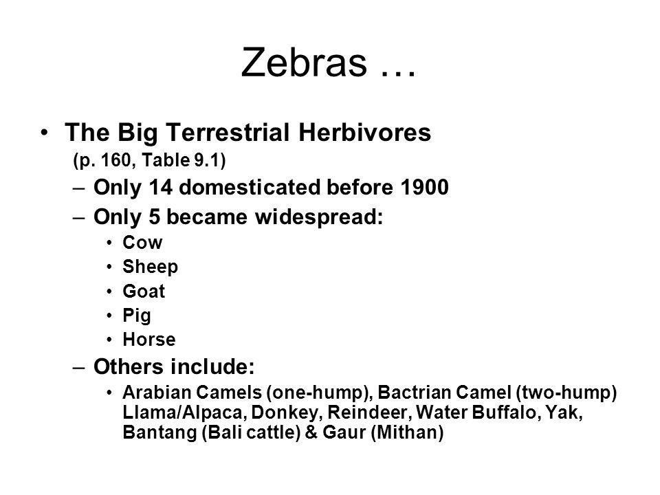 Zebras … The Big Terrestrial Herbivores (p.