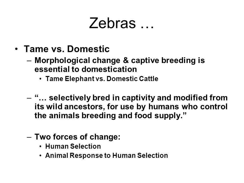 Zebras … Tame vs.