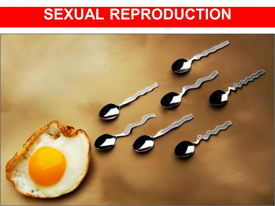 SEXUAL REPRODUCTION AND DEVELOPMENT SEXUAL REPRODUCTION